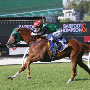Battling Billy causes minor upset in Barfoot & Thompson Auckland Cup