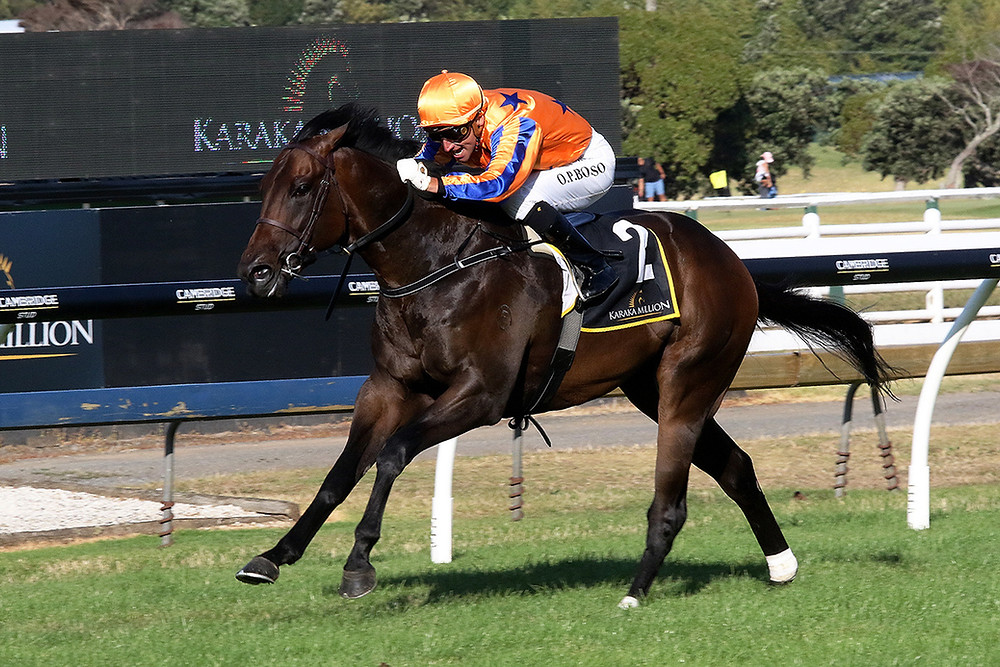 Cool Aza Beel will contest the Gr.1 Sistema Stakes (1200m) here at Ellerslie on Saturday. Photo: Darryl Sherer