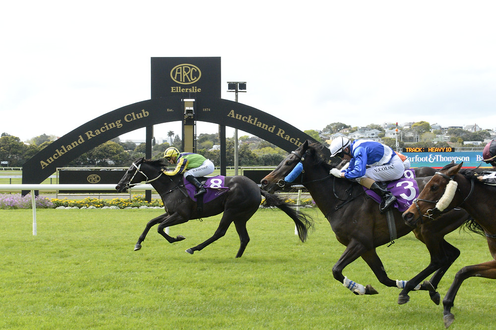 Danielle flashing past the post first at Ellerslie - a common occurrence
