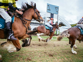 Auckland Cup WeekⓇ: Meet the Clydesdales racing in the Dunstan Feeds Auckland Clydesdale Cup