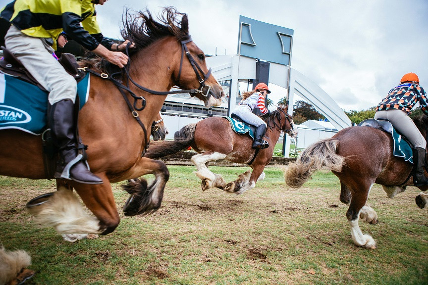 The Clydesdale thundering past in last year's Dunstan Feeds Auckland Clydesdale Cup