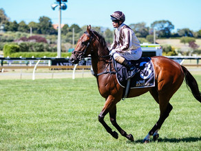 Auckland Cup Week®: Track gallops