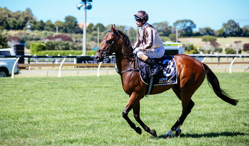 Auckland Cup Week track gallops