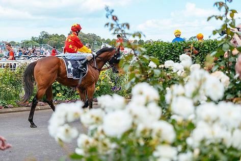 Races at Ellerslie.jpg