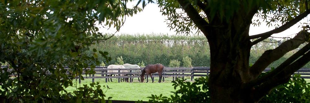 Barneswood Farm