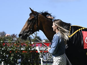 Avondale Cup and Guineas_edited.jpg