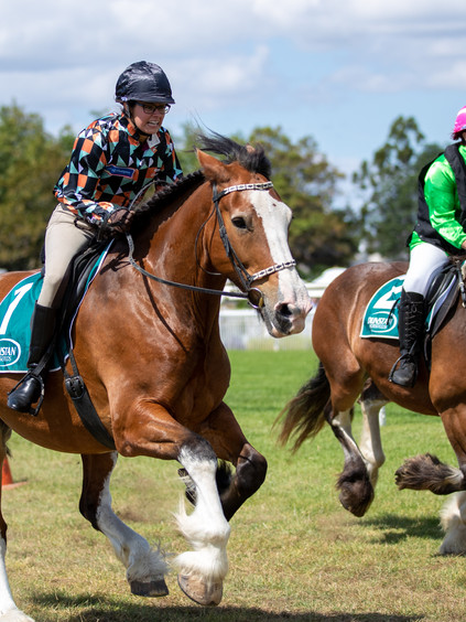 Auckland Clydesdale Cup_2020_Mike Rudlin