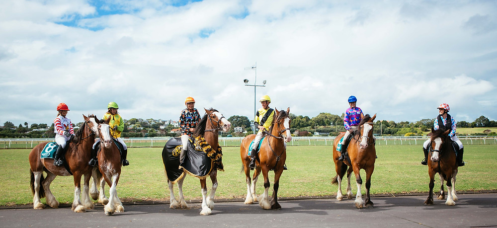 Last year's line-up of our Clydesdale racing finalists with winner, Grayson, third from left