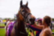 Business Partners Raceday Ellerslie.jpg