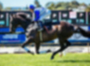 Mufhasa champion racehorse Auckland Cup