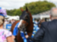 Auckland Cup Day.jpg