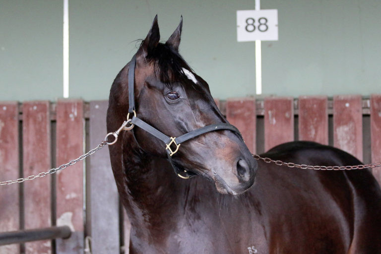 Sound will contest the Gr.1 Barfoot & Thompson Auckland Cup (3200m) here at Ellerslie on Saturday. Photo: Darryl Sherer