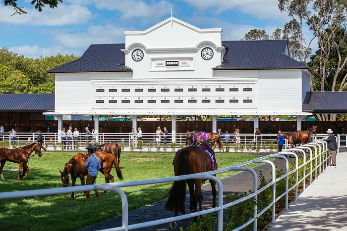 Our new stables provide the public unfettered access to seeing the horses behind-the-scenes on raceday and are a nice, peaceful environment for all