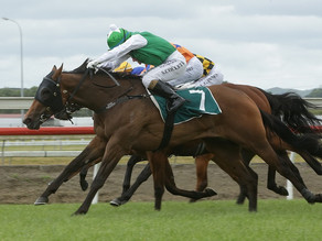 NEWS | Harvey doubles Karaka Million 2YO hand