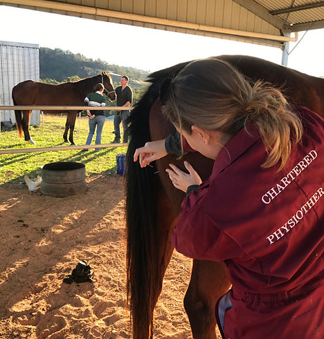 Physiotherapist treating a horse with dry needling