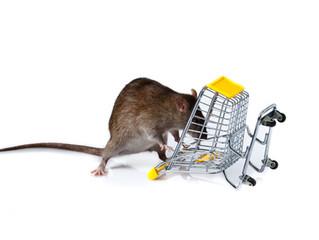 Les Rongeurs au supermarché!