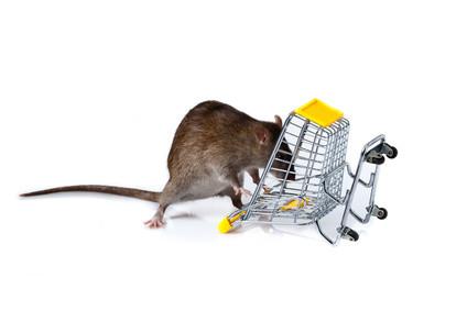 Les Rongeurs font leurs courses - Blog RATDOWN