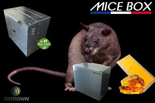 lancement MICE BOX v4 sans texte.png