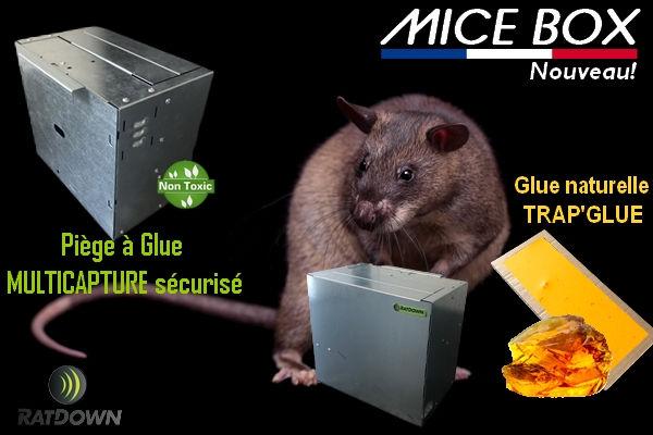 MICE BOX