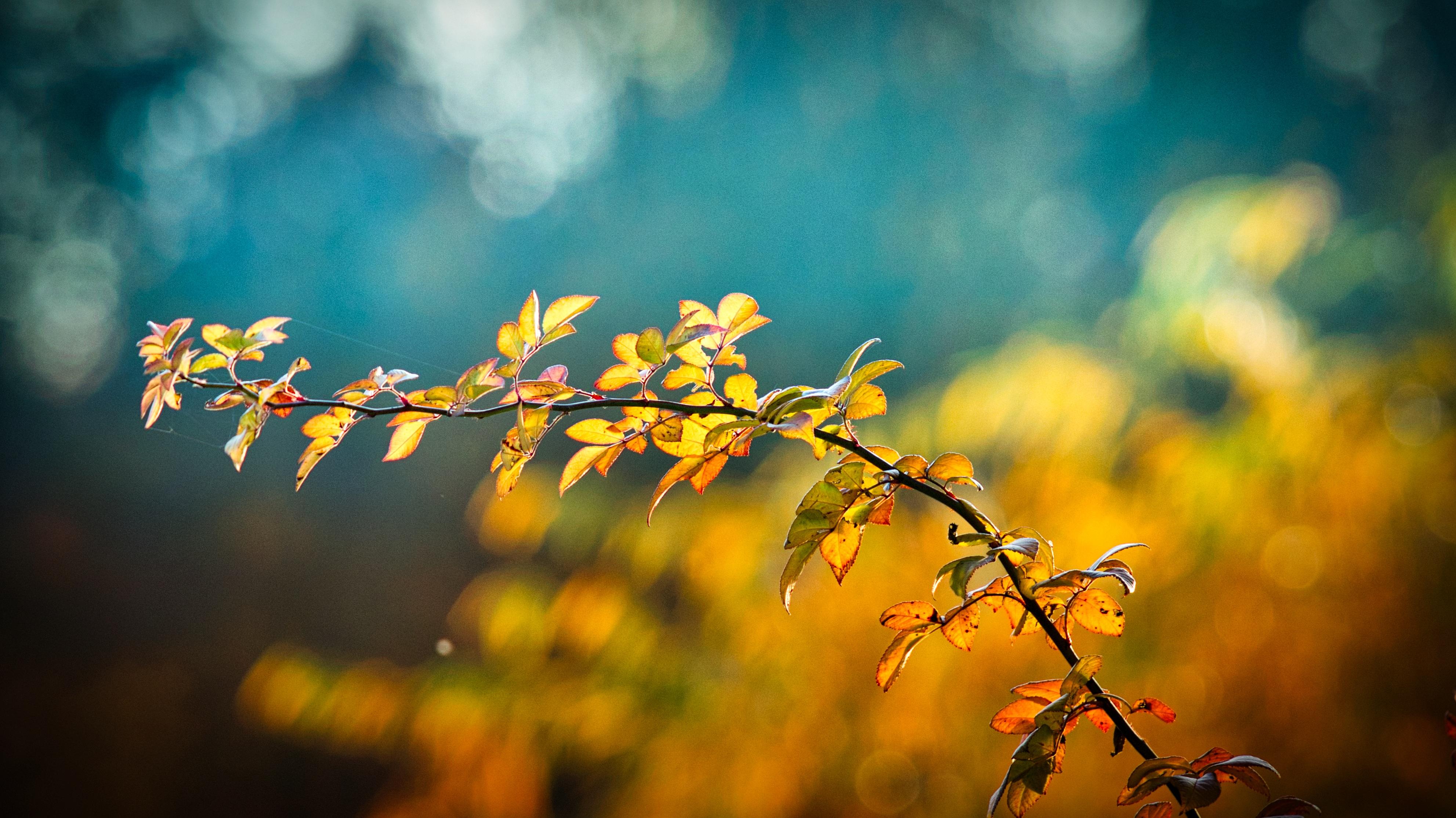 autumn-3846345