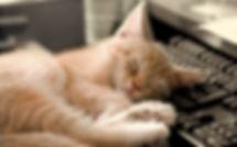 cat-sleeping-funny-photo-hd-wallpaper.jp