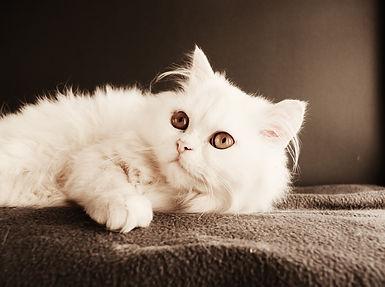 cat-3177589_1920.jpg