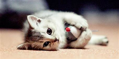 cat-gift-guide-today-main-181011_fce0abf