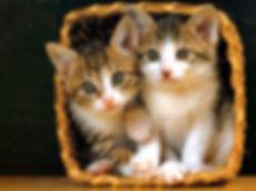 funny-cute-cat-635796173634032620-17213.