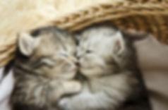 petmd-kitten-facts.jpg