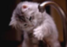 dp-of-cute-cats-3.jpg