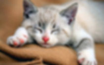 cat-story-new_647_081415040636.jpg