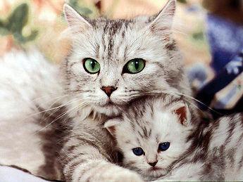 cat-wallpaper-3.jpg