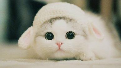 Cute-Kittens-Will-Melt-Your-Heart-Kitten