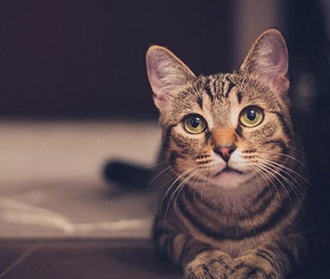 gatos-de-interior.jpg