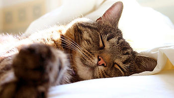 cute-cats-wallpapers-free-download.jpg