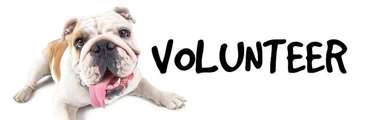 VolunteerSlider21.jpg