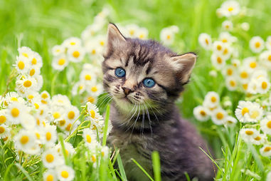 cute-cat-pictures-with-flowers-cats-with