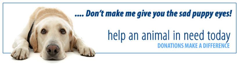 donate-header.jpg