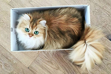 cutest-cats-on-the-internet-4-57eeab3c5f
