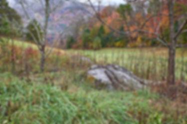 _1FX9027 - Pastoral Scene - NIK - 2400.j