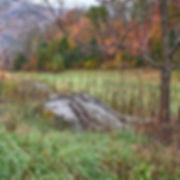 _1FX9027 - Pastoral Scene - NIK - 300x30