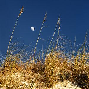 GP - Lb45a - Moon thru sea oats - 300x30