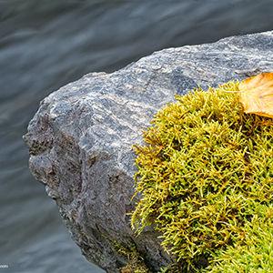_1fx9558-64 - Rock & Moss - NIK -- 300x3