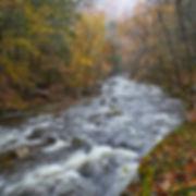 _1FX9786 - Tremont Stream - NIK - 300x30