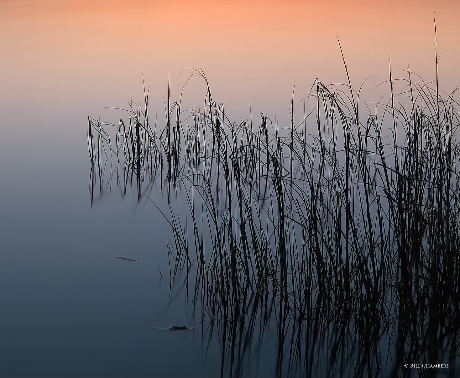 _LAN5174-2-Sea Grass at Dusk - 2400.jpg