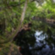 _1FX2446 - Aucilla River - NIK - cropped
