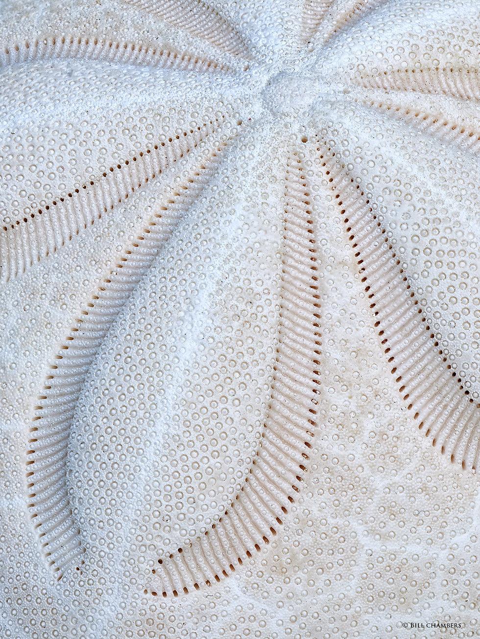 Sand Dollar - 2000.jpg