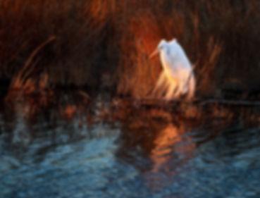 Egret at Last Light -_1FX6865 - 2400.jpg