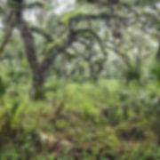 _1FX7505 - Soggy Woods - NIK - 300x300.j