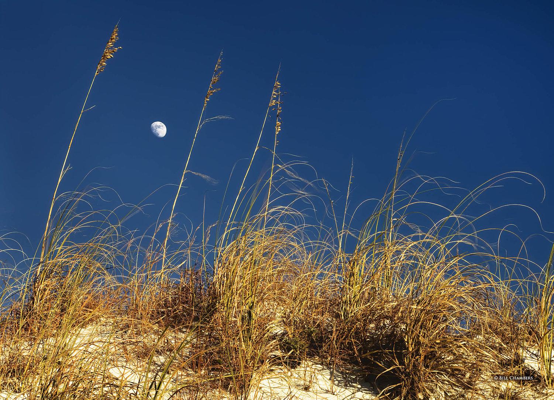 Lb45a - Moon thru sea oats - 2400.jpg